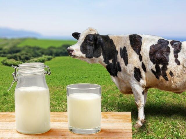 チーズなどが含まれる動物性乳酸菌