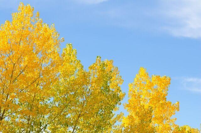 季節の変わり目はいつ頃?寒暖差〇度以上は体調不良に注意