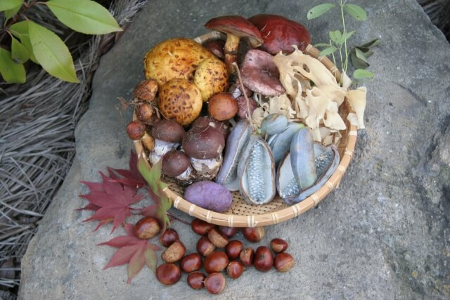 【季節の変わり目】季節の旬の食べ物で疲労を回復しよう!