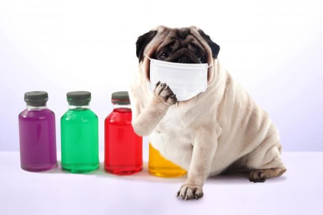 インフルエンザの潜伏期間にも感染力があるので注意