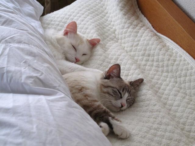 【疲れを取る方法】脳を休める「睡眠」