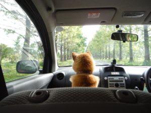 助手席に座って車酔い対策を