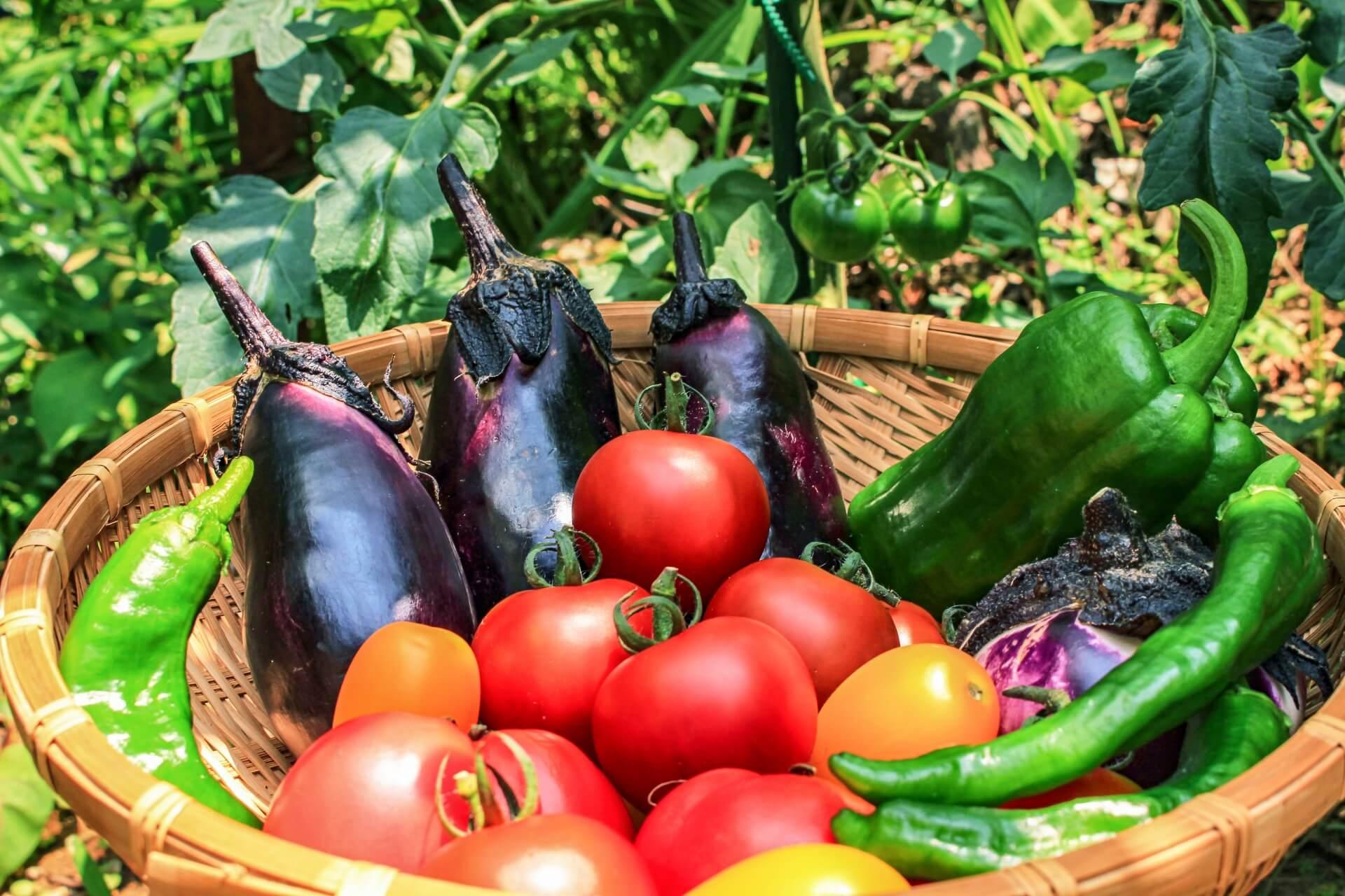 貧血を助ける栄養素(食べ物)と1日に必要な摂取量の目安