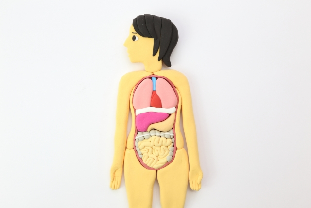 痔の原因は人体の構造が関係しています