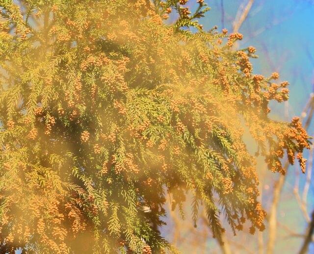 【花粉症の治療薬】抗アレルギー内服薬について知ろう!