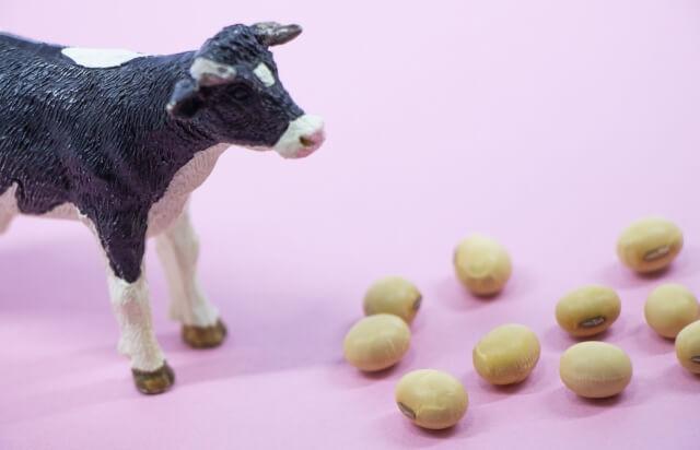 【豆乳の効果】豆乳には種類がある!牛乳とは違うの?